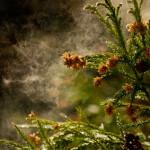 2015年花粉は5割増し!?今から考える花粉症対策とは