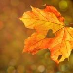 秋バテにならない生活習慣!温活で自律神経を整えよう